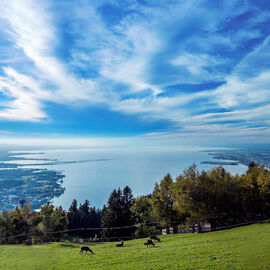 Lake Constance panorama with meadow in foreground